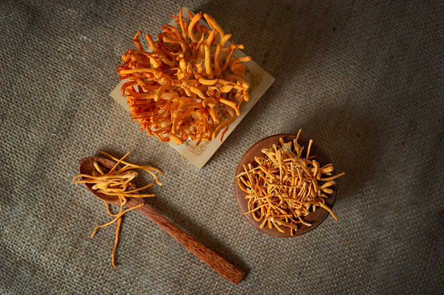 Cordyceps is effective against the ability of the virus to penetrate by supporting the regulatory function of the immune system