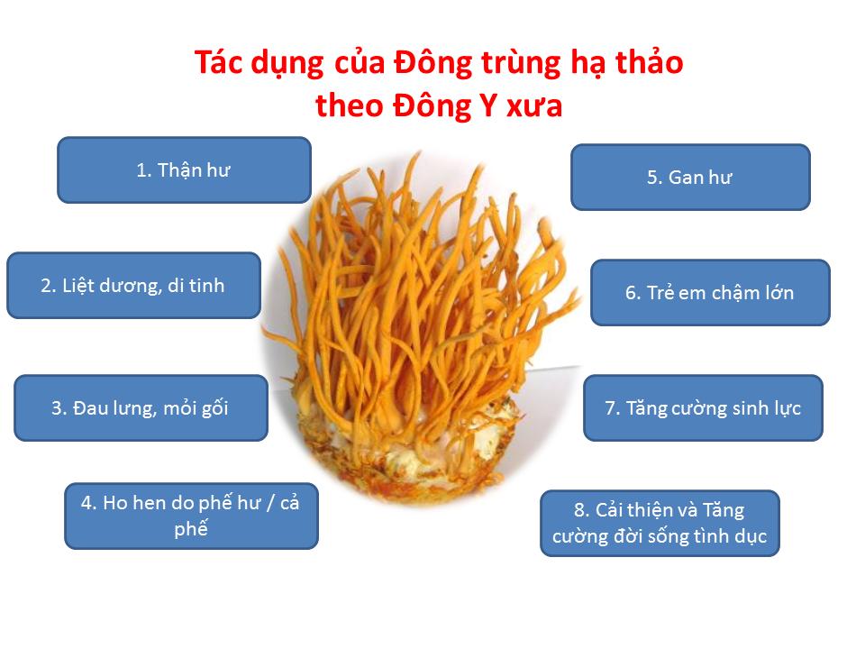 """Top 3 lý do giúp bạn trả lời câu hỏi """"Đông Trùng Hạ Thảo có phải là thuốc trị bệnh không?"""" 2"""