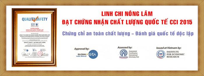 Nên mua nấm Linh Chi tại những địa chỉ uy tín