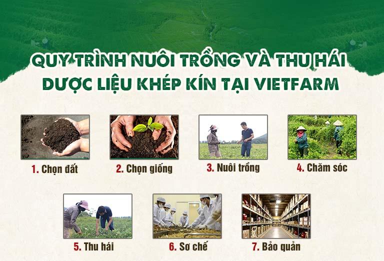 Cung cấp nấm lim xanh uy tín tại Hà Nội